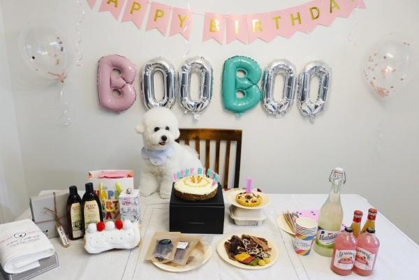 첫돌을 맞이하여 생일상 앞에 선 강아지의 모습 (사진=인스타그램 booboo.the.bichon)